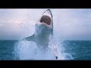 Акула ворвалась в клетку с дайвером