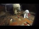 Уроки этикета от мамы-медведицы