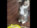 Смешное видео про кошек