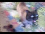 Кот сошёл с ума от запаха валерианы!