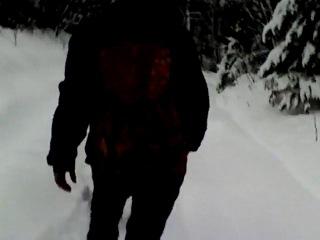 После нападения волка в Башкирии дети ходят в школу через лес с топорами