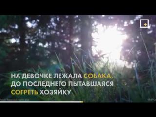 Лиза Фомкина. ЛизаАлерт.
