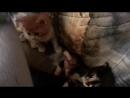 отдам в добрые заботливые руки котеночка-девочку. Родилась 4 января. Будет пушистая. Трехцветная. Ласковая, послушная, не атоман