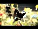 Очень красивый клип про лошадей/Конный Спорт.