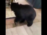Когда медведи достали