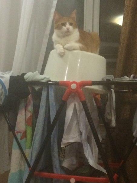 Убежал кот бакинский проезд дом 55 ранен мебельный. Кто увидит позвони