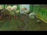 фламинго Вася и Маруся Роев ручей
