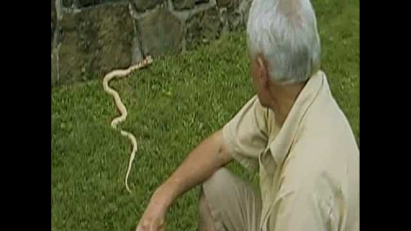 Двухголовые змеи Золотые девочки и Мы