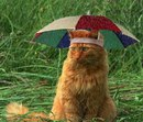Такое приспособление должно быть у каждого кота-джентльмена, любящего погулять…