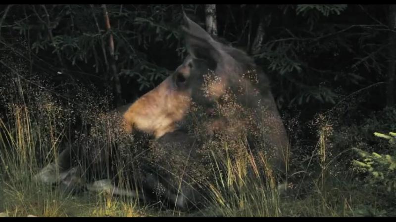 Россия царство тигров медведей и вулканов Russland Im Reich der Tiger Bären und Vulkane 2011