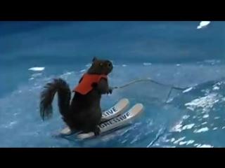 Белка на лыжах