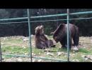 Медведь-дрочун