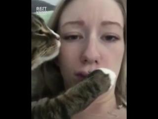 Самый душевный кот в мире