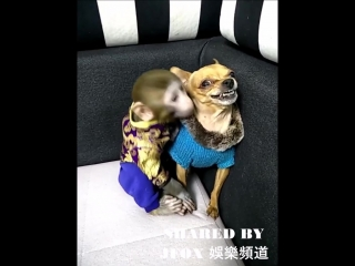 MONKEY FALL IN LOVE WITH DOG
