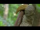 В дебрях Латинской Америки - Wildest Latin America (2012) 1. Амазонские джунгли