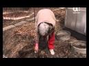 Как выращивать пионы Голова садовая