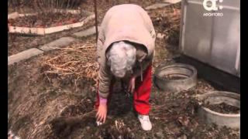Как выращивать пионы. Голова садовая