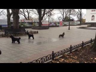 В Одессе собаки поют гимн города, автор Татьяна Ларина