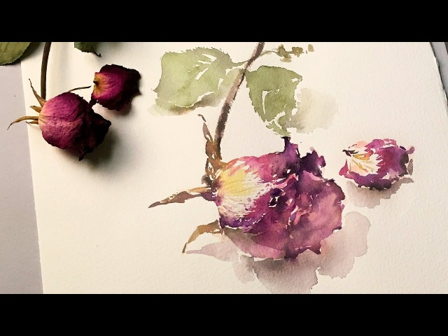 Dried Rose Watercolor Speed Painting