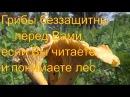 Поход в лес за грибами 13 июля 2017 Сибирь тайга Тихая охота Сбор грибов Грибалка г ...