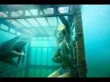 Акула пробилась в клетку к дайверу