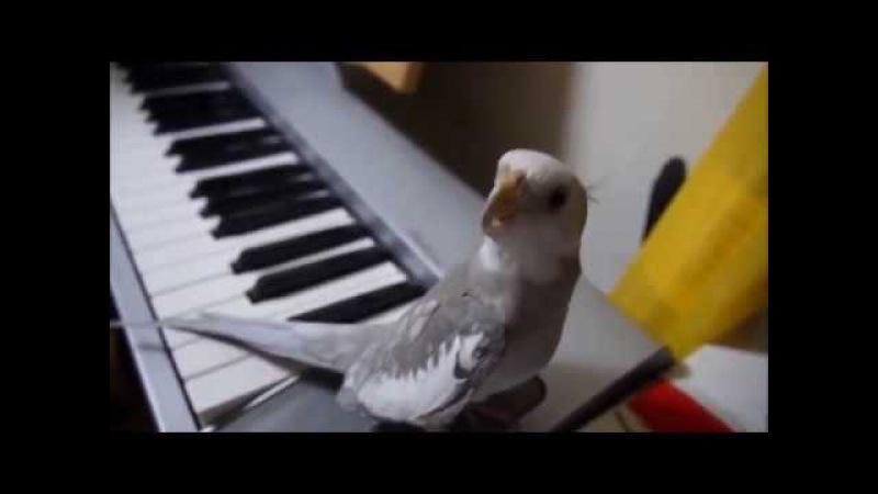 Такого попугая я в первый раз вижу