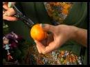 Ботаника Композиция из мандаринов