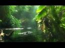 Африка. Река Конго. Документальный фильм National Geographic.