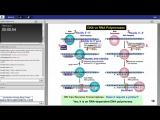 21st Lecture-Kaplan Step 1 CA-Biochemistry Molecular Genetics-Turco-June 22, 2015