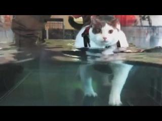кошка в клинике потери веса