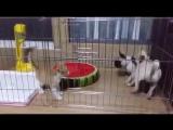 Страшнее кошки зверя нет (6 sec)