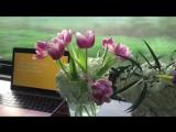 Cashmere Cat - Quit (Lyric Video) ft. Ariana Grande. Паблик: sunshine ariana.