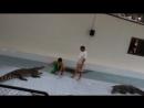 Тайланд Шоу с крокодилами. Как он резко щелкнул зубами, а русский турист стоит рядом и ничего не боится_04.03.2013