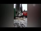 Медведь застрял в окне вагона под Нижневартовском (1)