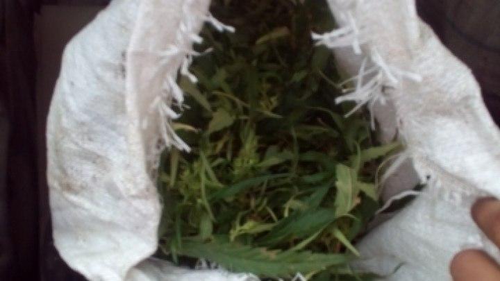 Более трех килограммов марихуаны обнаружили в багажнике ВАЗа в Томской области