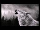 Nature sounds howling wolf, звуки природы вой волка, 天籟嚎叫的狼, sonidos de la naturaleza lobo aullando
