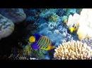 Подводная охота 22 подводный мир красного моря