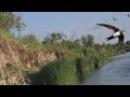 Ласточки Природа Река Лето Swallows Nature River Summer