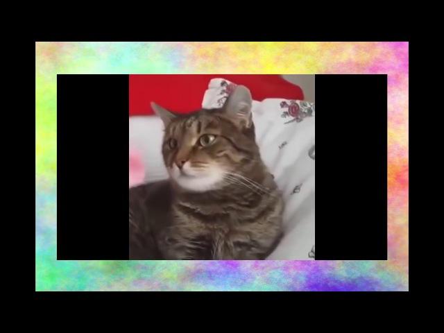 Пугливый кот Прикол СМЕШНО ДО СЛЕЗ! Видео приколы про кошек 2017