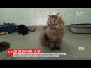 Ветеринарна клініка в Ірландії розшукує людину, якій подобається піклуватися про котів