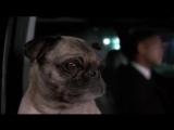 Песня пса про любовь.  Люди в черном 2