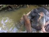 Ok, google. Как помыть слона?