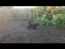 Кот прыгун Slo mo