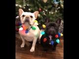 Feliz natal meus amorim!!!!
