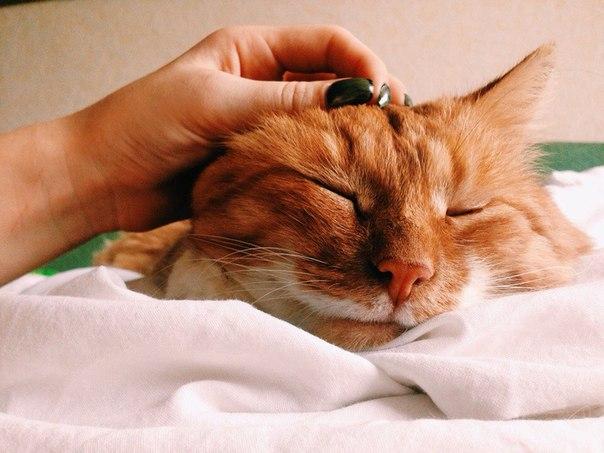 Как в домашних условиях вылечить насморк у кота