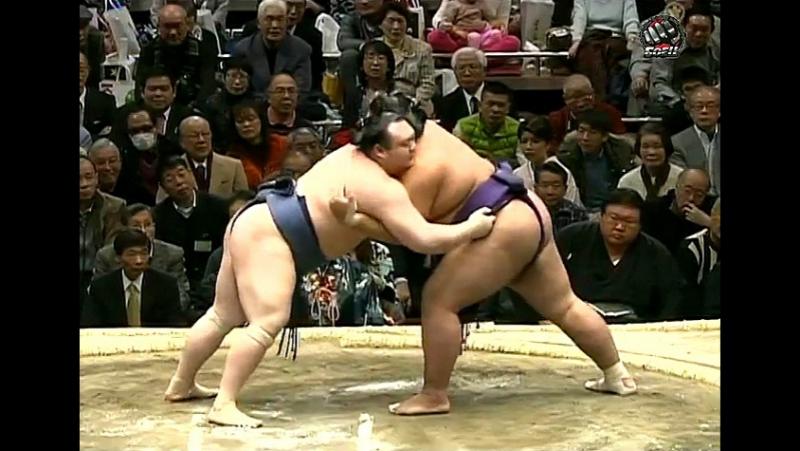 Hatsu Basho: Days 13-15 (2013)