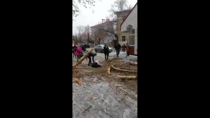 ▶ в Казани упало дерево на человека 20.04.2017