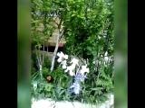 Мои родители создали такую красоту❤ Мой дом родной, как же сильно я соскучилась? Слава Богу за моих восхитительных  родителей!!!