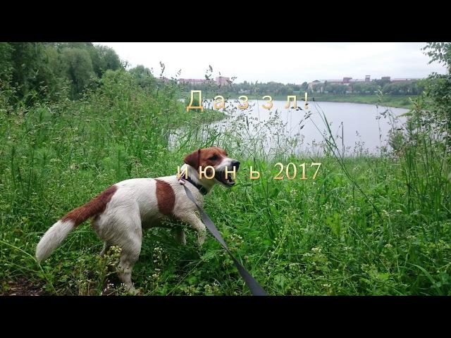 Джек рассел терьер Даззл - прогулка на озере!
