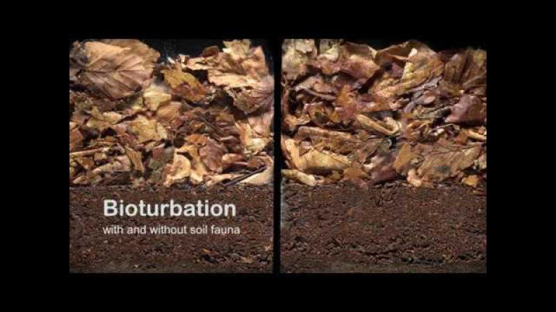 Биотурбация с почвенной фауной и без нее/Bioturbation with and without soil fauna